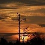 Backyard Sunrise Herons by Brian M. Lockwood (Honorable Mention)