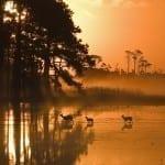 Chincoteague National Wildlife Refuge by Ron Hugo (Location: Assateague Island, Virginia) Coastal/Chesapeake Bay Category