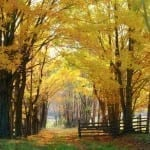 Fall Lane by Kathy Cobb (Honorable Mention)