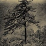 Shenandoah Tree by Deborah Kozura (Location: Skyline Drive) Honorable Mention