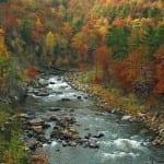 Goshen Pass Autumn by Anita Filson (Honorable Mention)