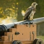 A Young Eagle at the Birthplace of Our Country by Chuck Durfor (Location: Jamestown) Honorable Mention