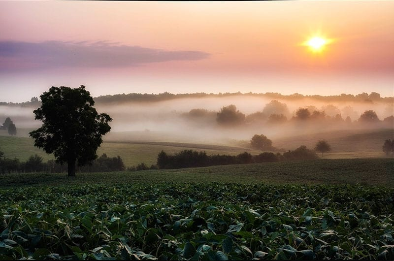 Chancellorsville Dawn by Buddy Secor (Location: Chancellorsville) Farms & Open Space Winner