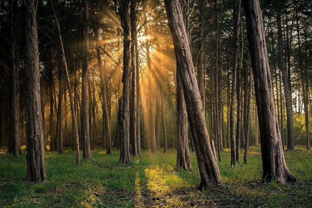 Light in the Woods by John Ernst