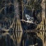 Mill Creek behind Jamestown Island by Roderick Perkinson