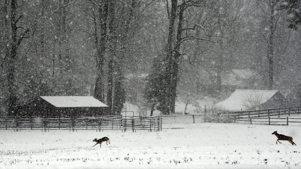 Heavy Snow in Hanover by Parks Rountrey (Hanover County)