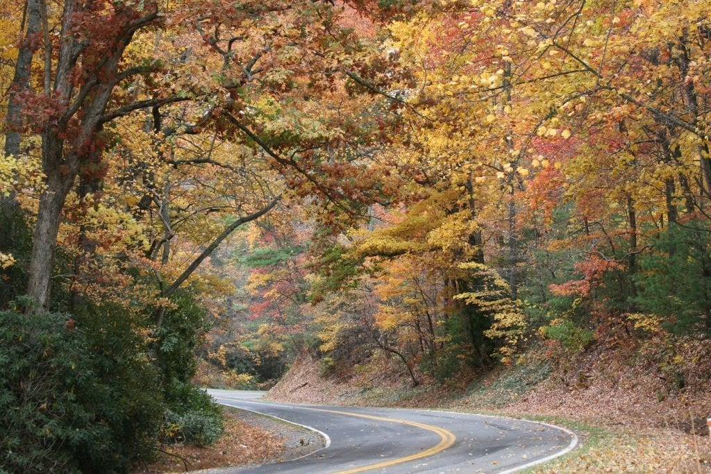 Autumn Roads by Anna Pruitt