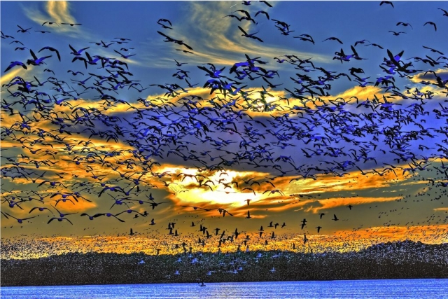 Best in Show Winner: Snow Goose Sunset by Ron Hugo (Chincoteague National Wildlife Refuge)