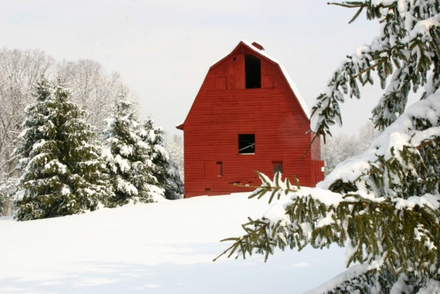 Farms & Open Space Winner: Morning Snow by Terry Crider (Spotsylvania)