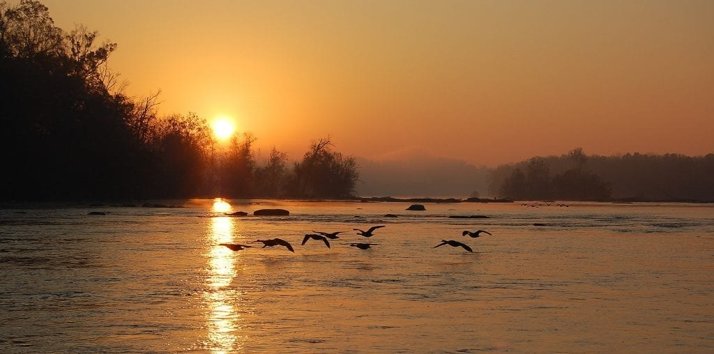 Vistas with Wildlife Winner: Pony Pasture Geese by Scott Adams (Richmond)