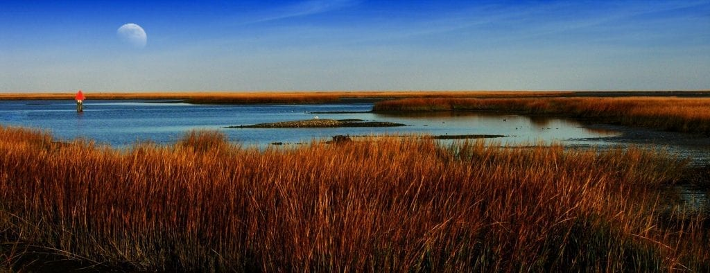 Eastern Shore Coast by Dianne Appell