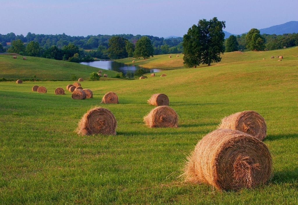 Hay Harvest by Gary Anthes