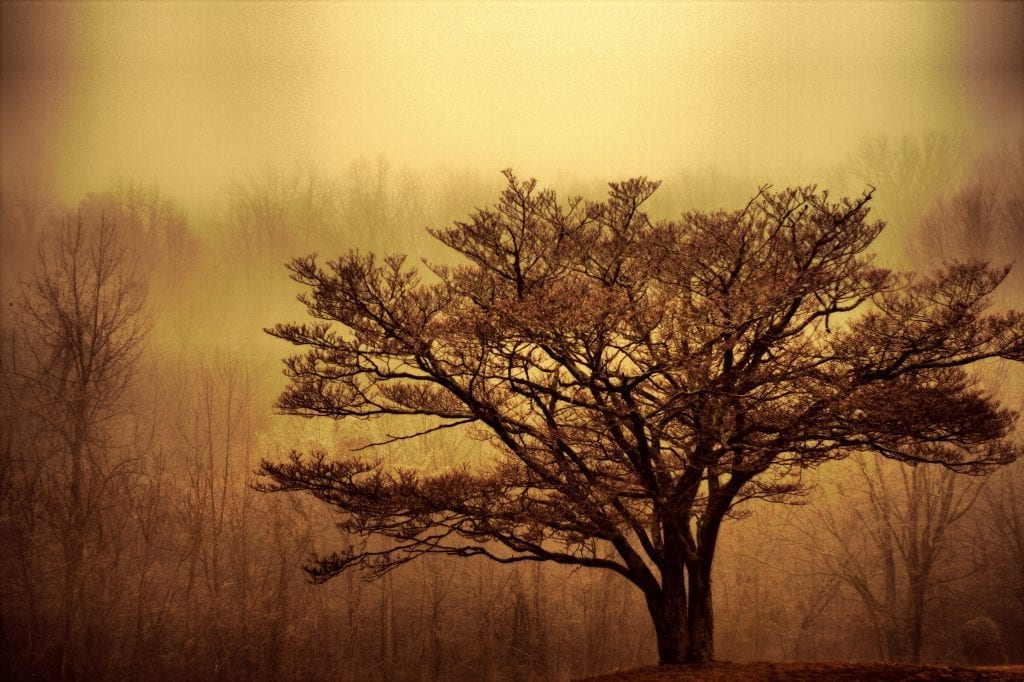 Amidst a Mist in Mechanicsville by Bud Johnson