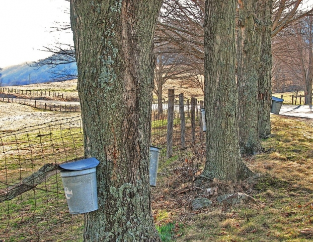 Maple Harvest in Highland County by Dave Lynch (Mill Gap)