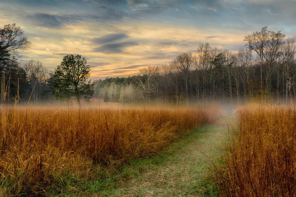 Morning Fog on the Battlefield by Theresa Rasmussen (Spotsylvania County)
