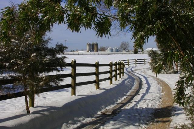 Go Welcome Winter by Ellen Davidson (King William)