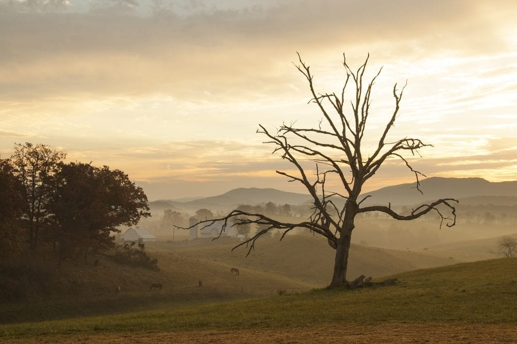 Sinkland Farms Morning by Aileen Fletcher (Christiansburg)