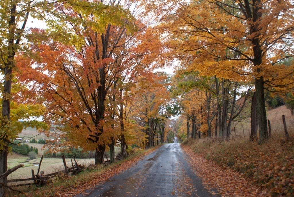 Blue Grass Road by Michael Bedwell (Highland County)