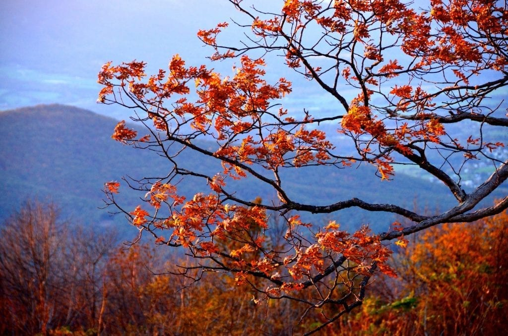 Windswept by Laura Dent (along Skyline Drive)