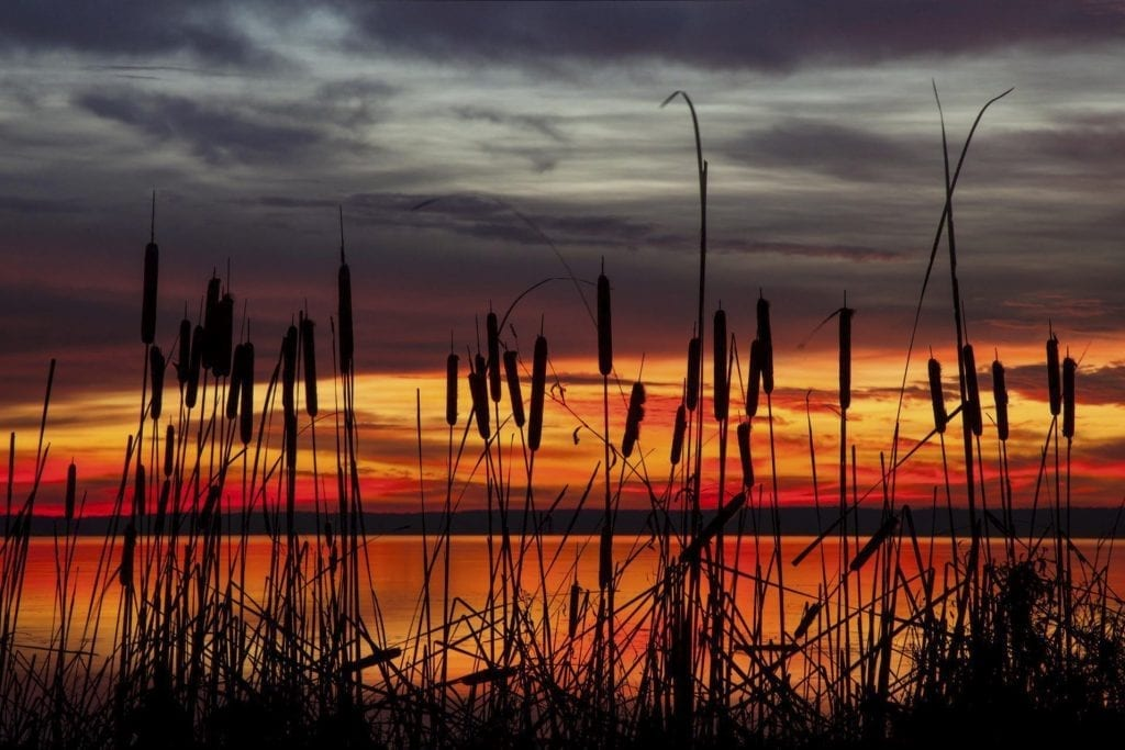 Aquia Landing on the Potomac by Buddy Secor (Stafford)