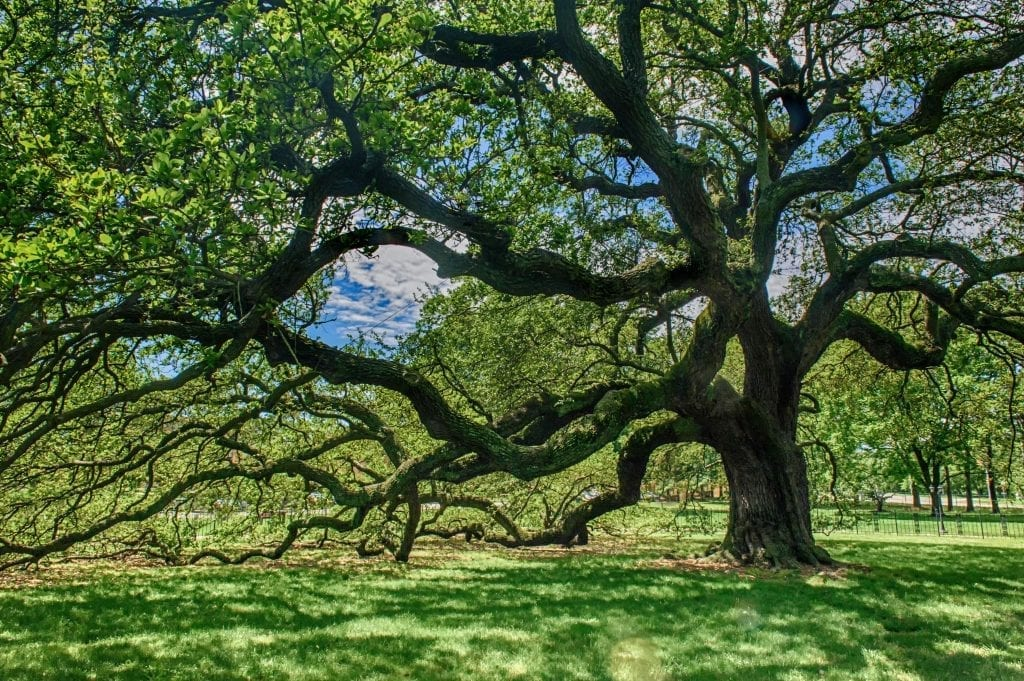 Emancipation Oak by Florence Womacks (Hampton)