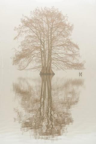 Foggy Stumpy Lake by Yuzhu Zheng (Virginia Beach)