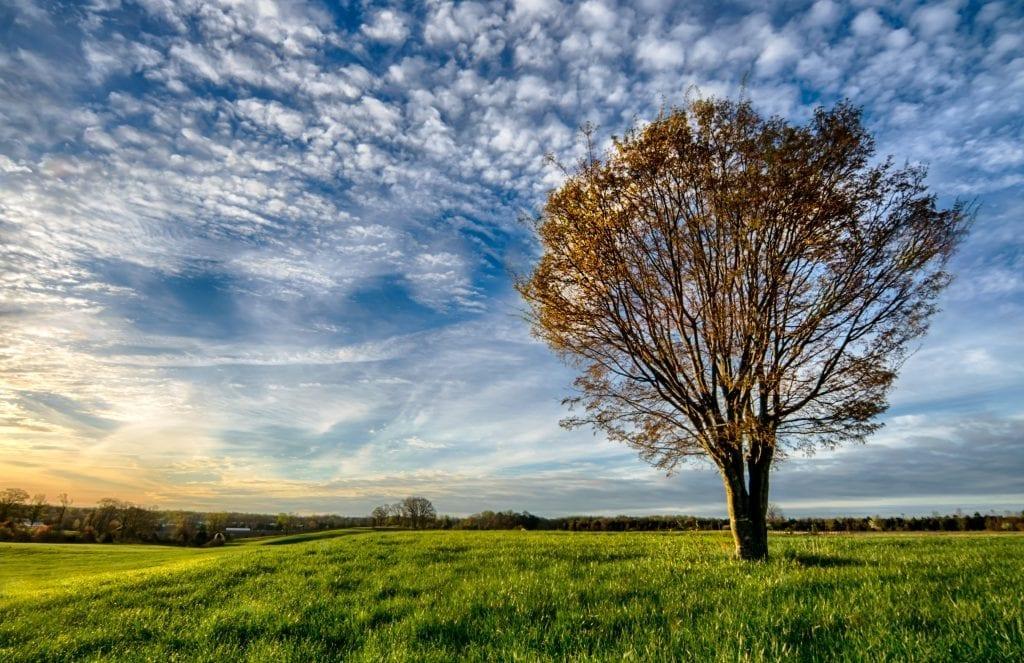 Morning Light by Theresa Rasmussen (Chancellorsville)