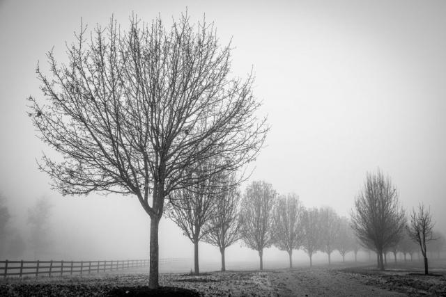 Powhatan Fog by Dick Pitini (Powhatan)
