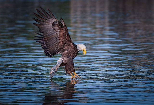 Eagle on the James River by Edward Episcopo (James River)