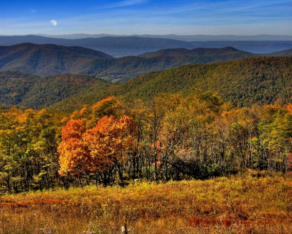 Along Skyline Drive by Dianne Appell