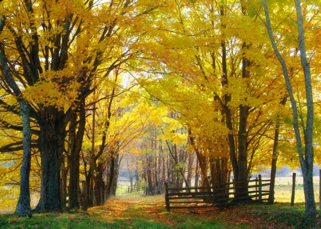 Fall Lane by Kathy Cobb