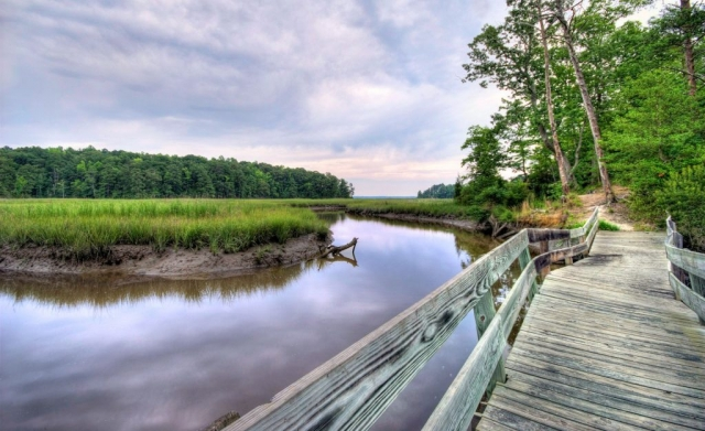 Taskinas Creek by Bill Dickinson (York River State Park)