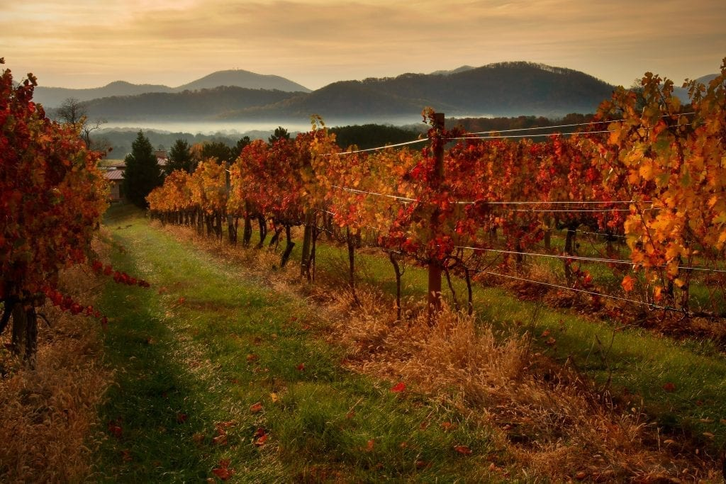 2016 Best in Show Winner: Autumn on the Vine by Deb Snelson (Afton Mountain)