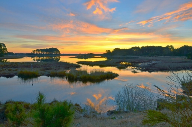 Coastal & Chesapeake Bay Winner: Sunrise on Assateague by Laura S. Dent (Assateague Wildlife Refuge on the Eastern Shore)