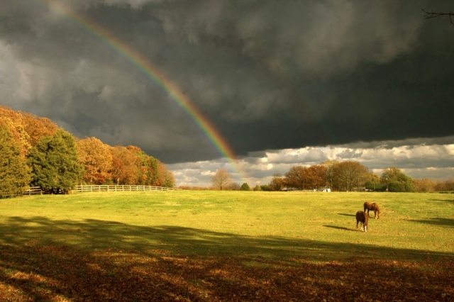 Farms & Open Space Winner: After the Storm by Gilpin Brown (Goochland County)