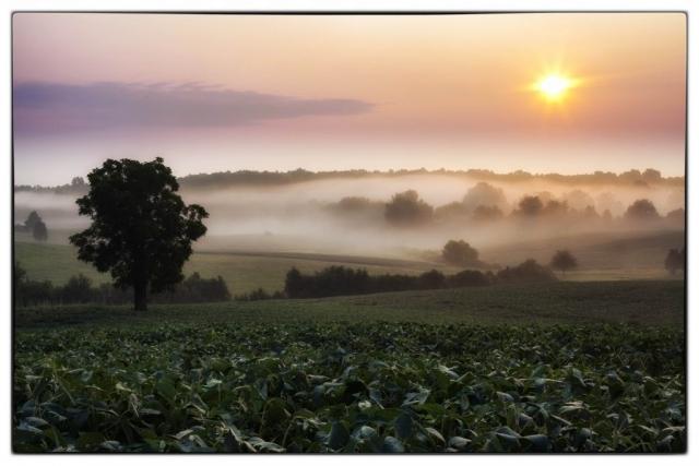 Farms & Open Spaces Winner: Chancellorsville Dawn  by Buddy Secor (Chancellorsville Battlefield)