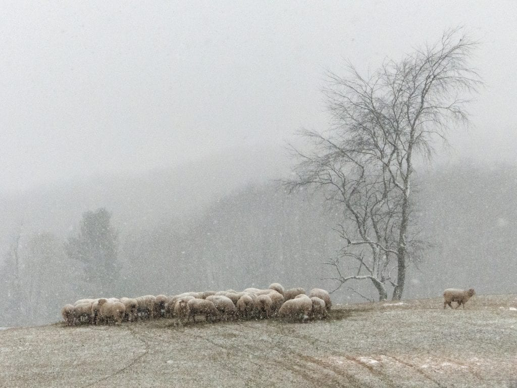 Farms & Open Space Winner: Last Snow by Michael Bedwell (Highland County)