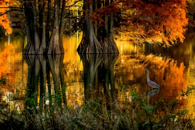 Rivers & Waterways Winner: Autumn at Stumpy Lake by Tracey Mershon (Virginia Beach)