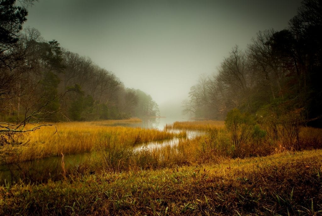 Rivers & Waterways Winner: York River Creek in the Fog by Robert Hunter (Wormley Creek in Yorktown)