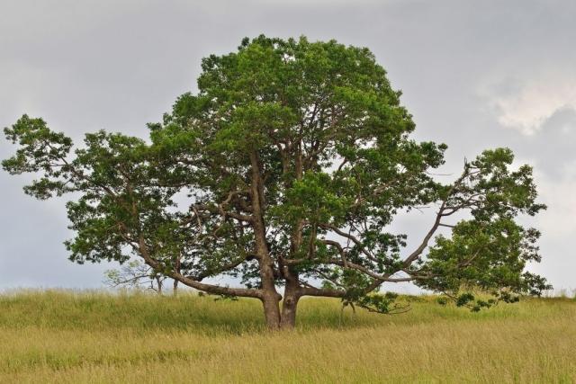 Scenic Trees Winner: Chester Lewandowski (Big Meadows in Shenandoah National Park)