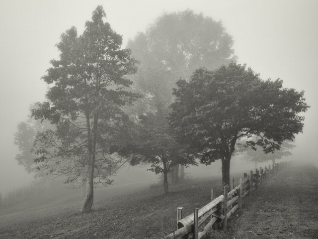 Scenic Trees Winner: Morning Fog, Peaks of Otter by John Walrath (Bedford)