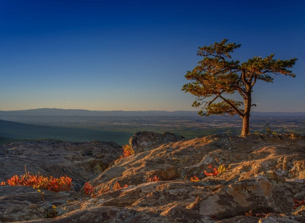 Scenic Trees Winner: Raven's Roost by Florence Womacks (Blue Ridge Parkway Overlook)