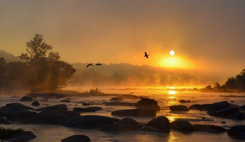Vistas with Wildlife Winner: Pony Pasture Ducks by Scott Adams (Richmond)