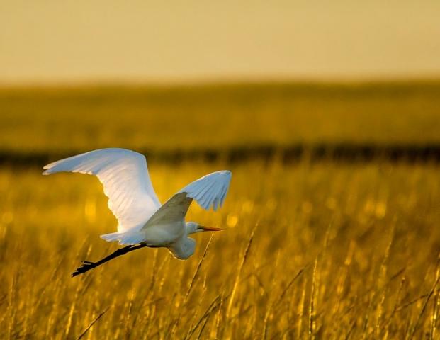 Vistas with Wildlife Winner: Into the Sunrise by Tracey Mershon (Virginia Beach)