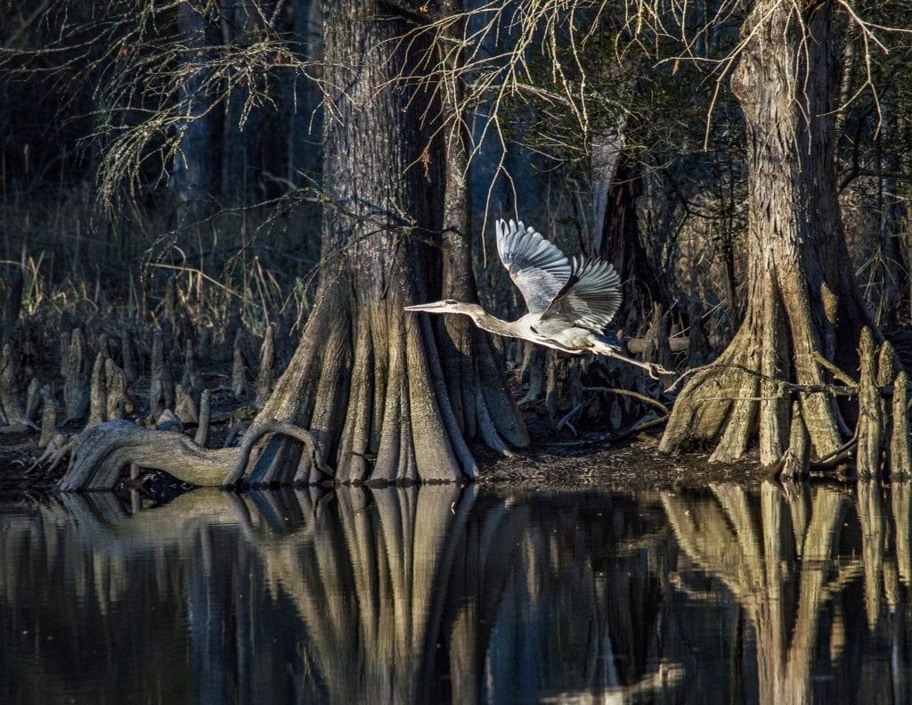 Vistas with Wildlife Winner: Mill Creek behind Jamestown Island by Roderick Perkinson (James City County)