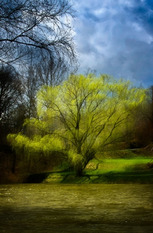 Willow on the Cowpasture River by Chuck Almarez