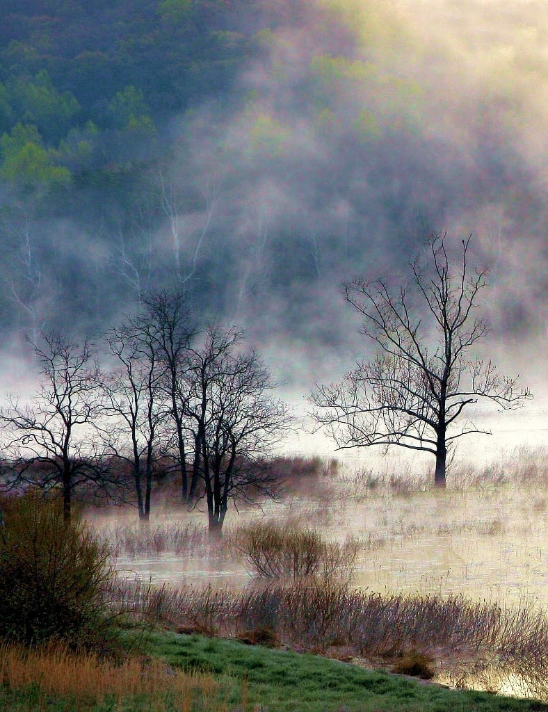 Farms & Open Space Winner: Farm Pond, Sunrise by Gary Anthes (Rappahannock County)