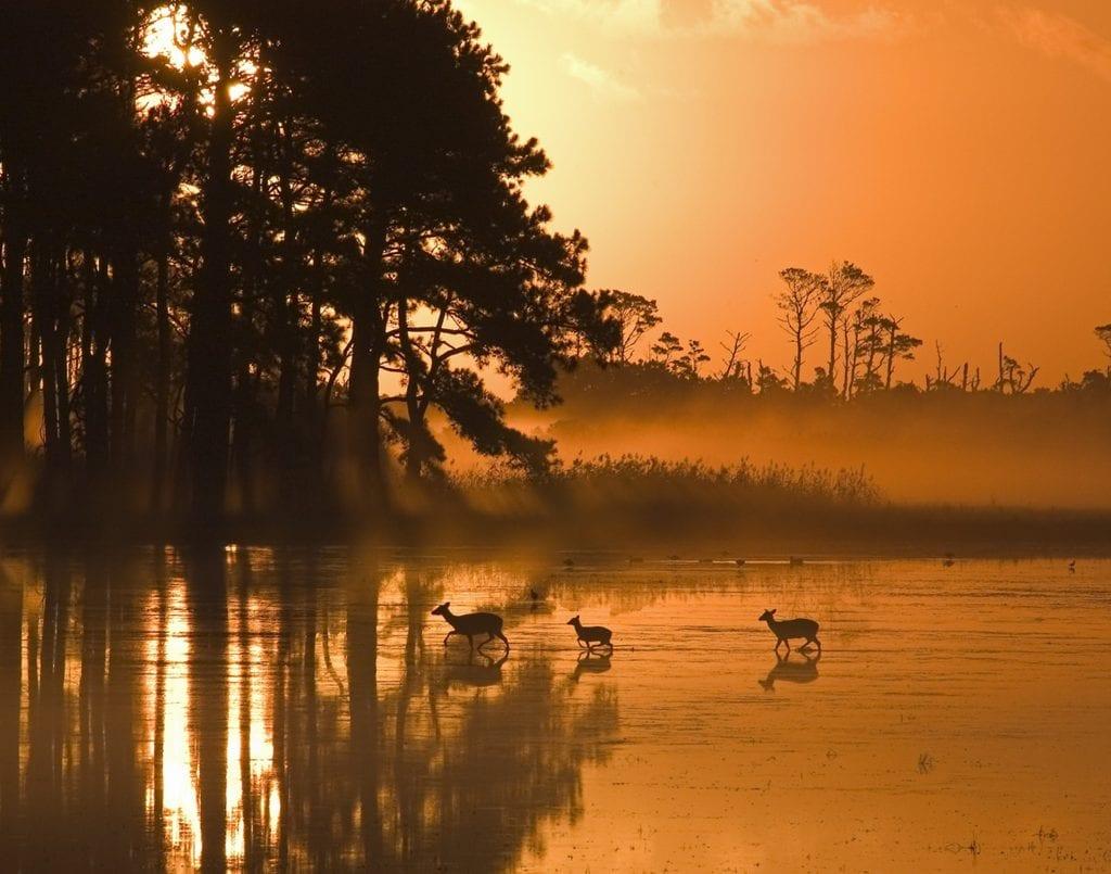"Coastal & Chesapeake Bay Winner: ""Assateague Foggy Sunrise"" (Assateague Island) by Ron Hugo of Lee Mont"