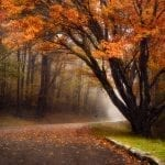 """Highways & Byways Category Honorable Mention: """"Drive Into the Autumn"""" (Skyline Drive in Shenandoah National Park in Stanardsville) by Vladimir Grablev of Reston"""