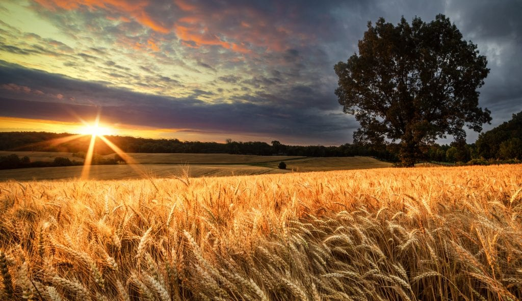 Chancellorsville Golden Sunrise